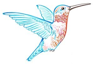 Hummingbird colour by Michael Quinlyn-Nixon